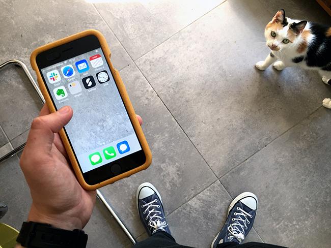 Foto van de bedrijfstelefoon met verschillende apps. Op de achtergrond kijkt lapjeskat Betty nieuwsgierig toe.